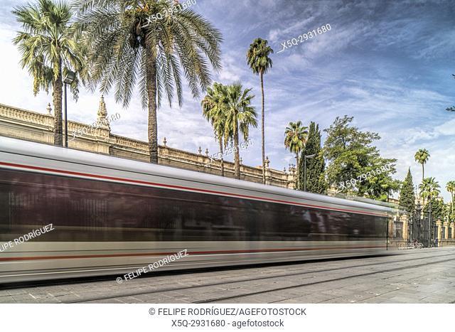 Tram on San Fernando street, Seville, Spain