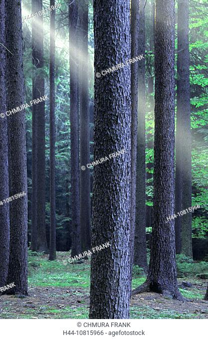 Czech Republic, Southern Bohemia, Forest, air, beam, breakthrough, calm, concept, concepts, creation, Czech Republic