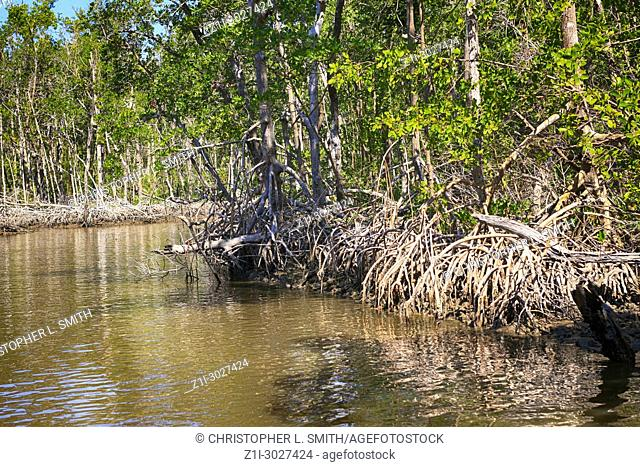 Mangrove swamps around Everglades City in South Florida USA