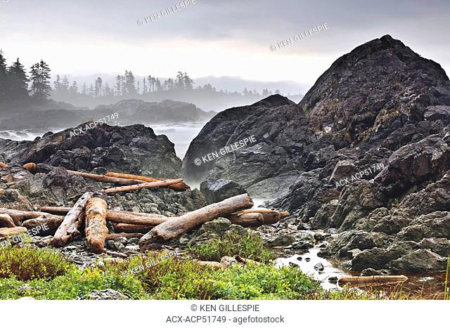 Driftwood logs on the Pacific Coast, Wild Pacific Trail, Vancouver Island, British Columbia, Canada