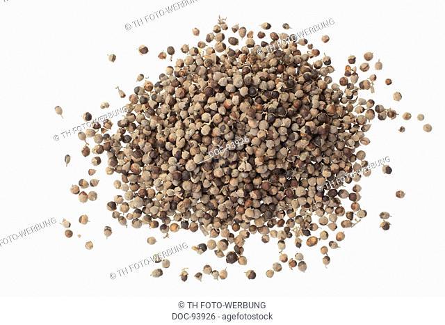 Medicinal plant Agnus castus , Chaste berry , Agnus castus , Vitex agnus castus