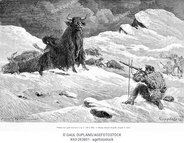 Hunting yaks, drawing by Émile Bayard. Engraving from 'Le tour du monde'