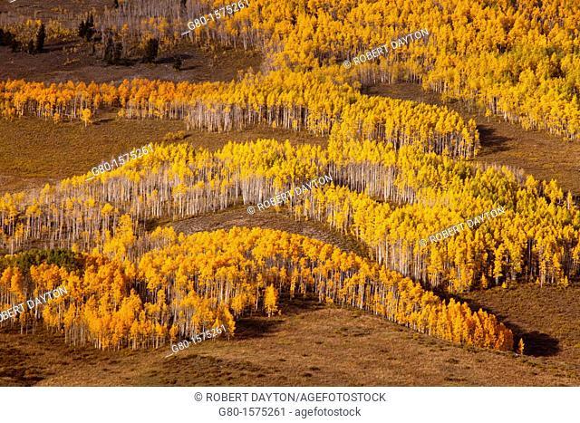Fall color near Crested Butte, Colorado