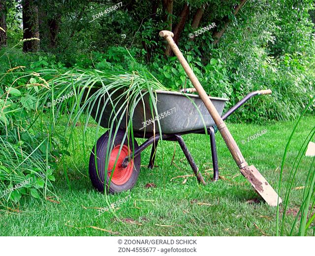 Wheelbarrow with spade and plants
