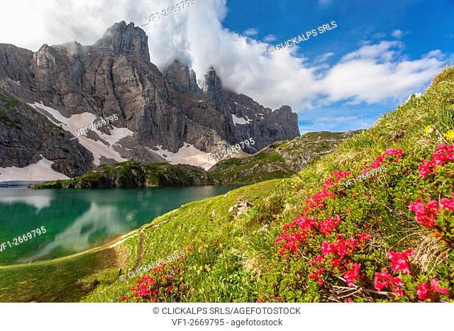 Europe, Italy, Veneto, Belluno. Nearby Lake Coldai, panorama on the Civetta with a blossoming of rhododendrons in the foreground