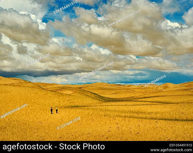 Mongolia. Sands Mongol Els, sandy dune desert, bright sunny day