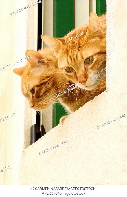 Cats. Palermo, Sicily. Italy