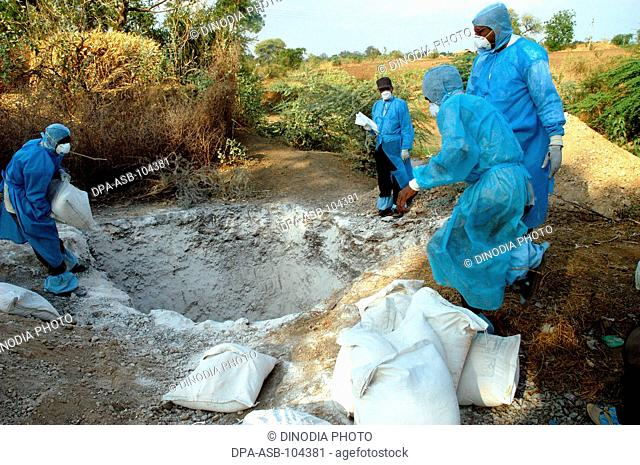 Health workers fill the pit with lime powder to bury infected chickens collected in the backyard of the houses as Bird Flu is detected at Hingona village in...