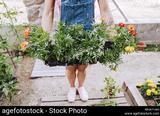 Mid adult woman holding plants while standing in vegetable garden