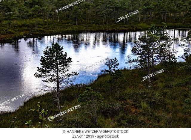 Rainfall at Kemeri Bog Trail, Kemeri National Park, Latvia, Baltic States, Europe