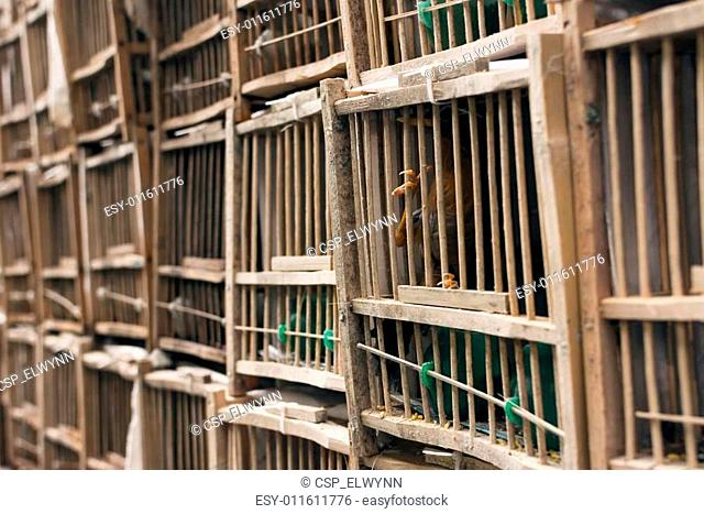 Birds in the cage