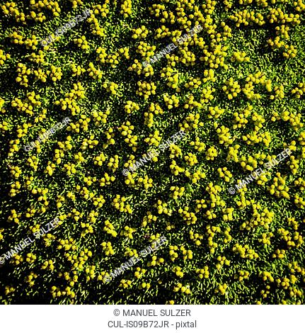 Overhead view of green plants, Nahuel Huapi National Park, Rio Negro, Argentina