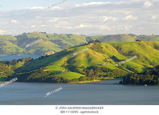 Green rolling farmland seen across Hoopers Inlet on the Otago Peninsula, New Zealand