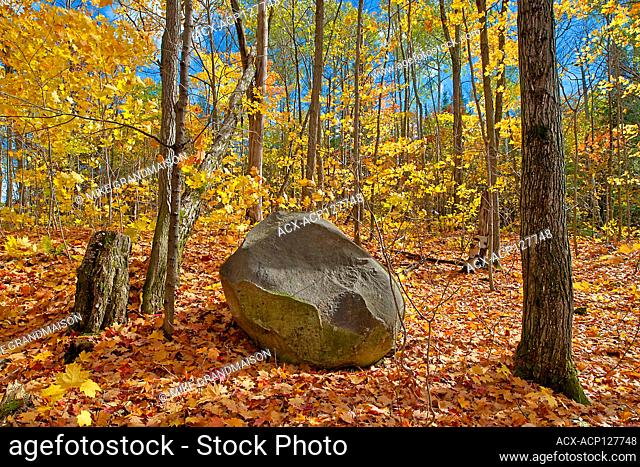 Rock in hardwood forest in autumn near Parry Sound. Horseshoe Lake Ontario Canada