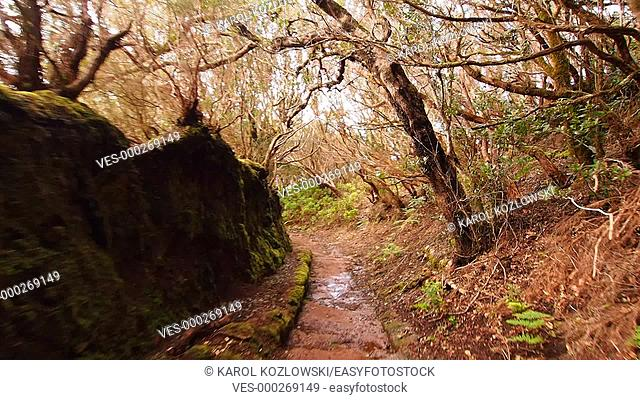 Walking through Anaga Forest on Tenerife, Canary Islands, Spain
