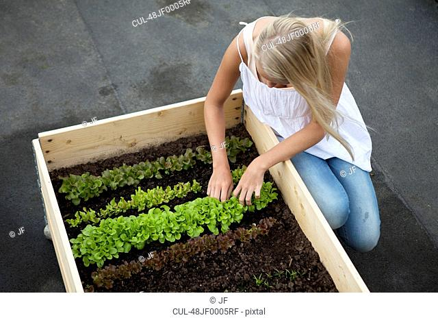 Teenage girl working in plant box