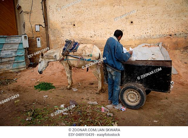 Donkey in Fez, the second largest city of Morocco