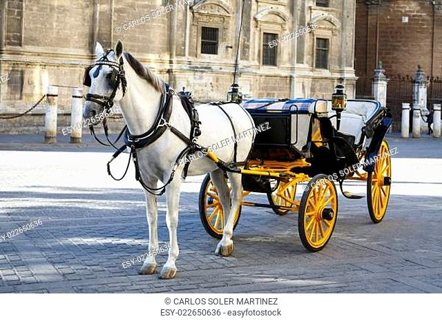 White horse and traditional tourist carriage in Sevilla