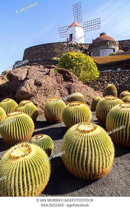 Cactus plants and windmill Jardin de Cactus designed by César Manrique, Guatiza. Lanzarote, Canary Islands, Spain. Cactaceae, Echinocactus grusonil