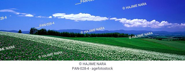 Farm Fields, Biei, Hokkaido, Japan