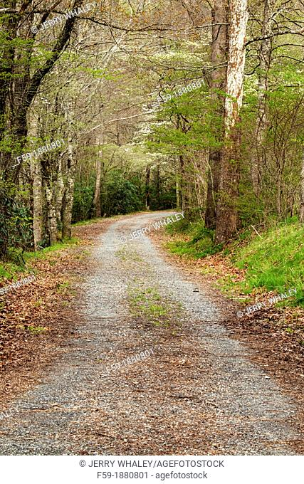 Spring Images, Gravel Road, Oconaluftee Area, Great Smoky Mtns National Park, NC