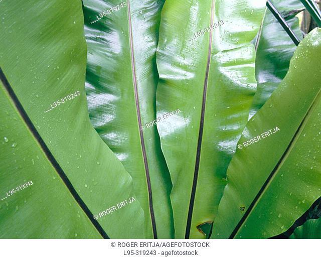 Tropical fern at botanical garden. Blanes. Spain