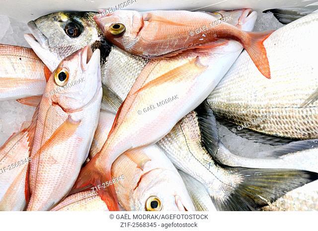 Sea breams fished in Marseille. Sparus aurata and Pagellus bogaraveo