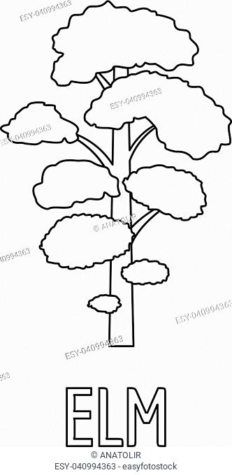 Elm Tree Diagram