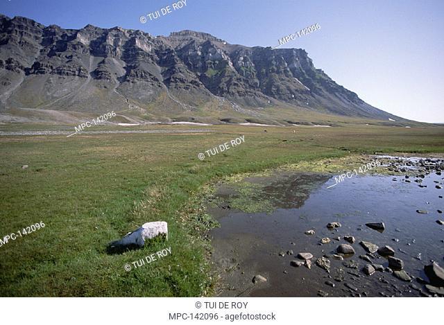 ARCTIC MEADOW, WITH SVALBARD REINDEER,  BELLSUND, SVALBARD ARCHIPELAGO,  NORWEGIAN ARCTIC