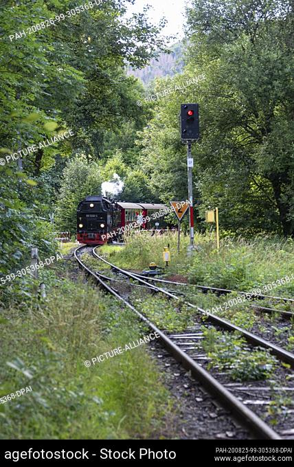 12 July 2020, Saxony-Anhalt, Wernigerode: The Brockenbahn train enters the station Wernigerode-Hasserode. Photo: Stephan Schulz/dpa-Zentralbild/ZB