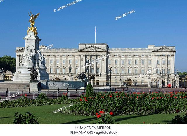 Geraniums at Buckingham Palace, London, England, United Kingdom, Europe
