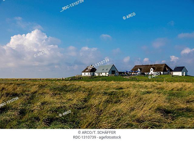 Hamburger Hallig, Nordfriesland, Schleswig-Holstein, Germany