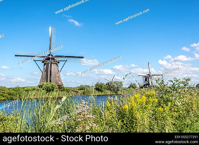 Beautiful dutch windmill landscape at Kinderdijk in the Netherlands a blue sky day of summer