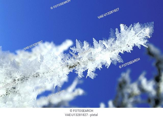 blue, bough, branch, CLOSE, close-up, cold, crystal