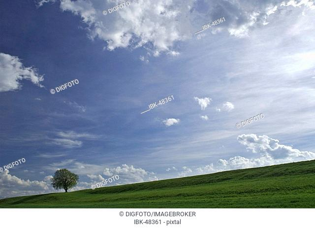 Solitary tree in front of blue sky with clouds