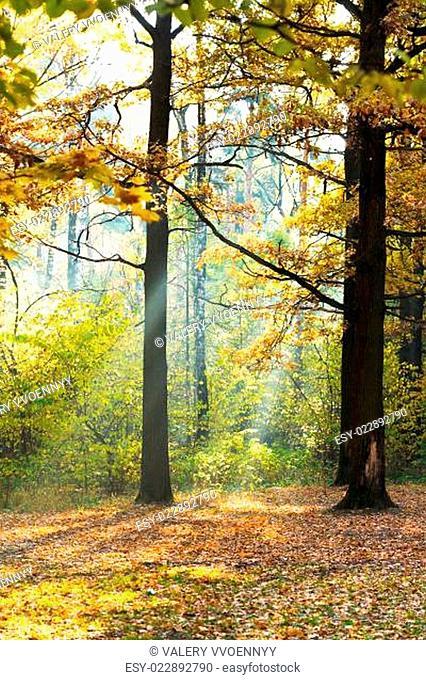 sunbeam lit glade in autumn forest