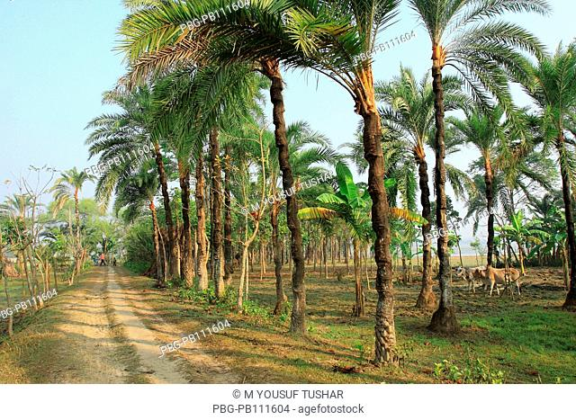 a village road in jessor district of Bangladesh
