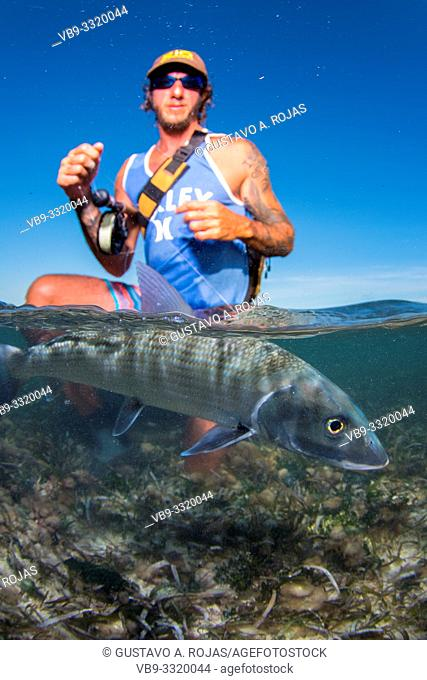Over/under SPLIT off man hold a BIG BONEFISH underwater los roques venezuela