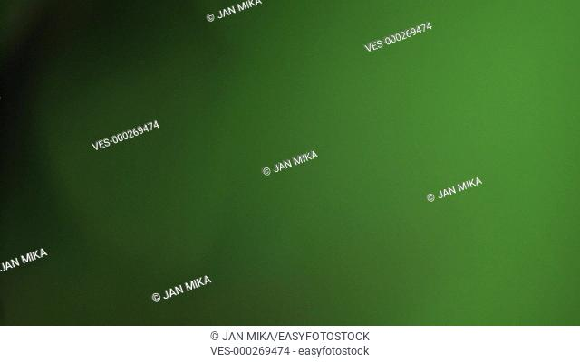 Macro of green Cannabis plant