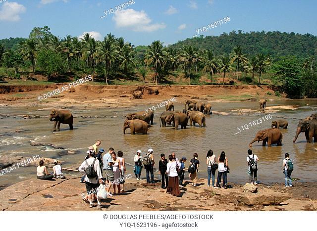 Pinnewala Elephant Orphanage, Sri Lanka