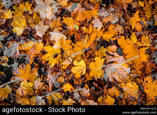 Fallen leafs in the forest at autumn time