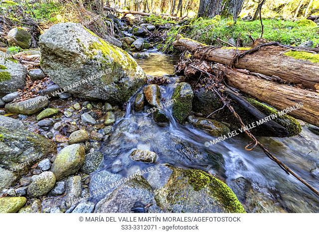Spring at Solana Toro stream in Sierra de Gredos. Avila. Spain. Europe