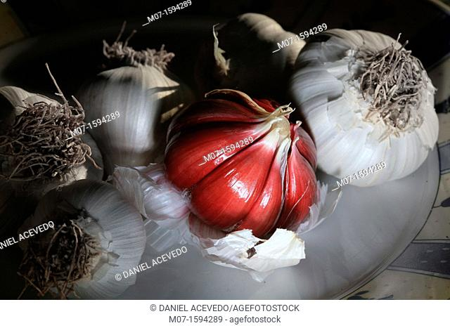Organic garlic, organic farming, ajo ecológico