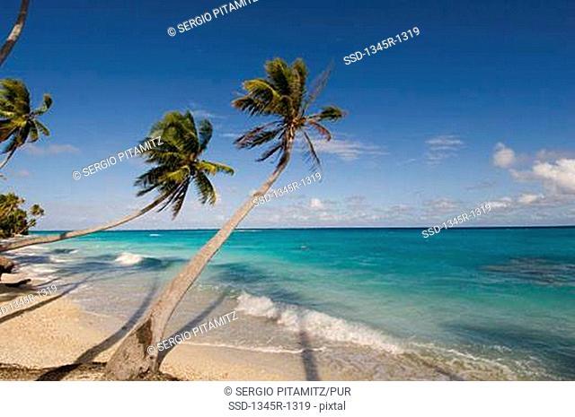 Palm trees overhanging the beach, Fakarava, Tuamotu Archipelago, French Polynesia