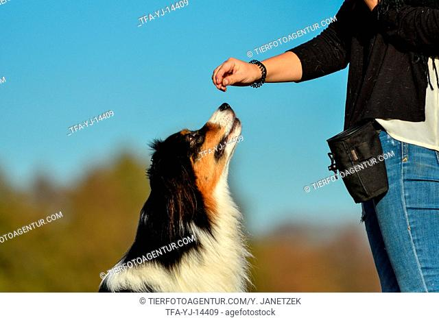 woman with Australian Shepherd