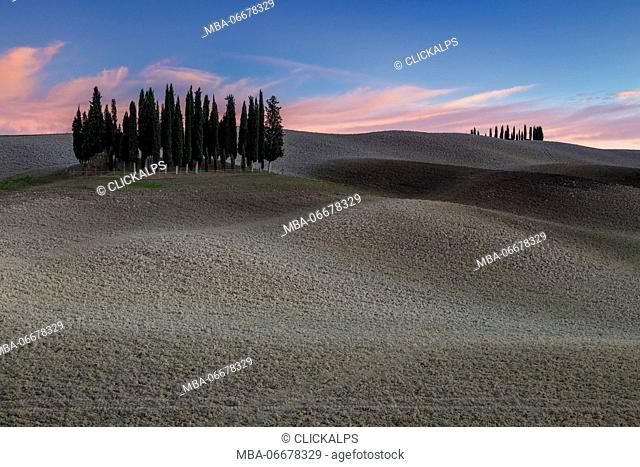 Autumnal sunset at the cypresses near San Quirico d'Orcia, Val d'Orcia, Tuscany, Italy