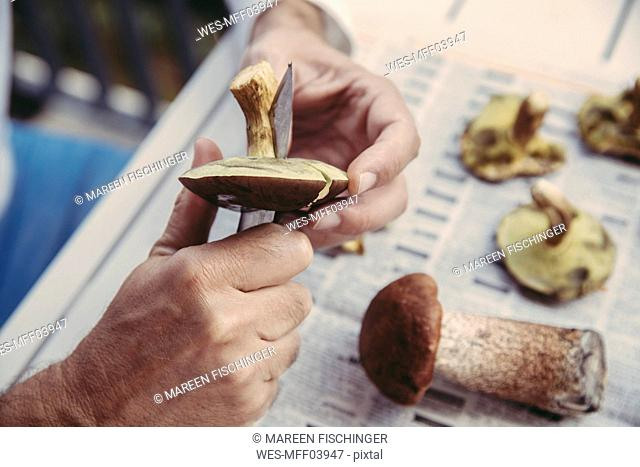 Man's hand cutting bay bolete