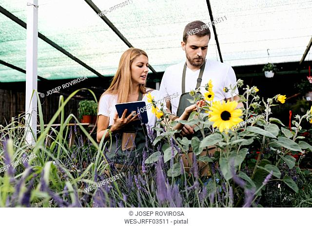 Two workers in a garden center caring for flowers