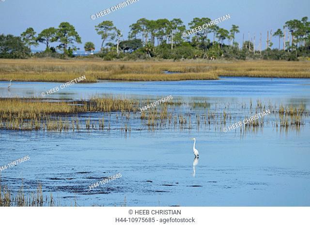 USA, Florida, Gulf County, Gulf of Mexico, St Joseph Bay State Buffer Preserve