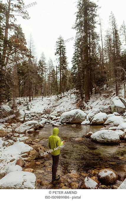 Rear view of male hiker looking out at river in snowy Sequoia National Park, California, USA